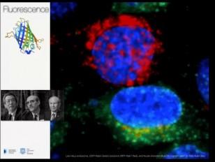 Fluorescence - Battaglia