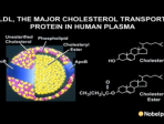 Partnerships, Puzzles and Paradigms - A collaborative approach to cholesterol