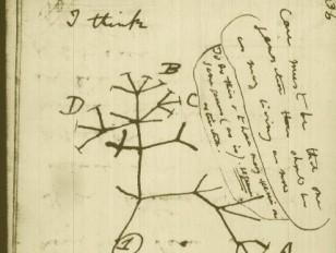 6 Updated Notions on Darwinian Evolution - Lindau-Nobel - Werner Arber - Medicine 2011