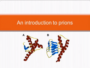 An Introduction to Prions - Hann Choi - Kings Canterbury
