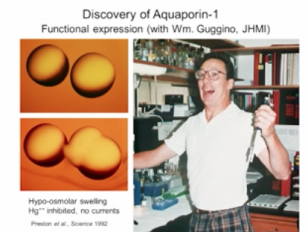 Aquaporin Water Channels - From Atomic Structure to Malaria Lindau-Nobel Peter Agre 2013