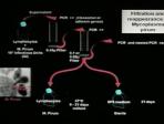DNA between Physics and Biology - Lindau-Nobel - Luc Montagnier - Medicine 2010