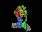 Generating the Fuel of Life  - Lindau-Nobel - John Walker - Medicine 2014