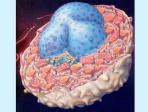 Membrane Proteins - Lindau-Nobel - Harmut Michel - Medicine 2014