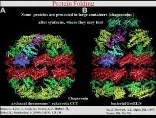 Proteasome and DegP Protease, Mechanisms and Drug Design Lindau-Nobel Robert Huber 2012
