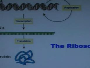 The Amazing Ribosome - Lindau-Nobel - Ada Yonath - Chemistry 2010