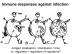 Why do we not have - L-N - Zinkernagel - Medicine 2014