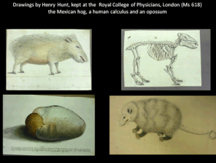 Unsung heroes: artistic contributors to the early Royal Society