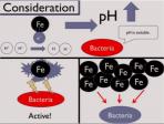 Hydrogen fermentation